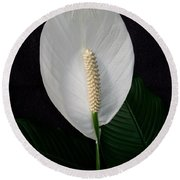 Peace Lily Round Beach Towel