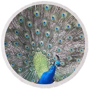 Round Beach Towel featuring the photograph Peacock Bow by Caryl J Bohn