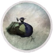 Round Beach Towel featuring the photograph Peacock by Bradley R Youngberg