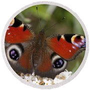 Peacock Butterfly Round Beach Towel by Richard Thomas