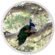 Peacock Round Beach Towel by Gina Dsgn