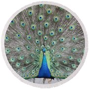 Peacock Round Beach Towel by John Telfer