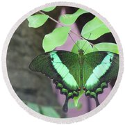 Round Beach Towel featuring the photograph Peacock Swallowtail by Lingfai Leung