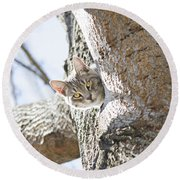 Peaking Cat Round Beach Towel