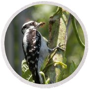 Peanut Butter Loving Red Caucated Woodpecker Round Beach Towel by Belinda Lee