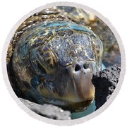 Round Beach Towel featuring the photograph Peek-a-boo Turtle by Amanda Eberly-Kudamik