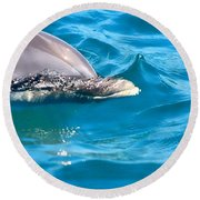 Peeking Dolphin Round Beach Towel by Debra Forand