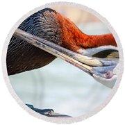 Pelican Itch Round Beach Towel by Cynthia Guinn