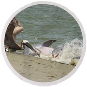 Pelican Steals The Fish Round Beach Towel
