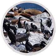 Round Beach Towel featuring the photograph Pelican Visitor by Susan Wiedmann