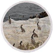 Pelicans Seals N Daisies  Round Beach Towel