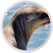 Pensive Sea Lion  Round Beach Towel
