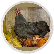 Round Beach Towel featuring the photograph Pepper's Autumn Stroll by Donna Brown