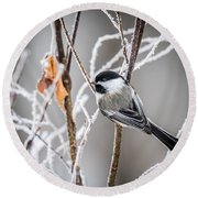 Perched Black Capped Chickadee Round Beach Towel