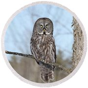 Perching Perfect Round Beach Towel by Heather King