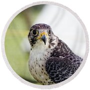 Round Beach Towel featuring the photograph Peregrine Falcon Bird Of Prey by Eleanor Abramson