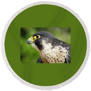 Round Beach Towel featuring the photograph Peregrine Falcon by Cynthia Guinn
