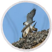 Peregrine Falcons - 5 Round Beach Towel