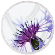 Perennial Cornflower Round Beach Towel