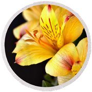 Peruvian Lily Round Beach Towel by Deb Halloran