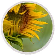 Round Beach Towel featuring the photograph Petals by Ronda Kimbrow