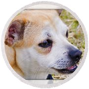 Pets Round Beach Towel