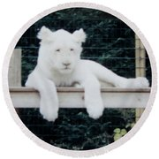 Round Beach Towel featuring the photograph Philadelphia Zoo White Lion by Donna Brown