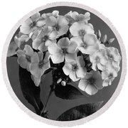 Phlox Blossoms Round Beach Towel