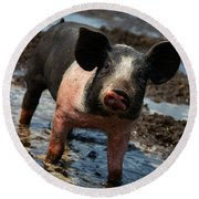 Pig In The Mud Round Beach Towel
