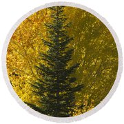 Pine In Aspens Round Beach Towel