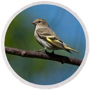 Pine Siskin Perched On A Branch Round Beach Towel