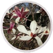 Round Beach Towel featuring the photograph Pink And White Spring Magnolia by Caryl J Bohn