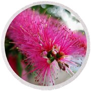 Round Beach Towel featuring the photograph Pink Bottlebrush Flower - Within Border by Leanne Seymour