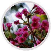 Pink Cherry Blossoms Round Beach Towel by Pamela Walton