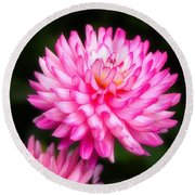 Pink Chrysanths Round Beach Towel