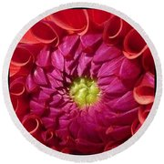 Pink Dahlia Variation Round Beach Towel by Susan Garren