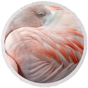 Round Beach Towel featuring the photograph Pink Flamingo II by Robert Meanor