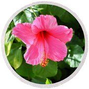 Pink Hibiscus With Large Stamen Round Beach Towel by Jay Milo