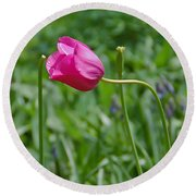 Pink Tulip Round Beach Towel by Aimee L Maher Photography and Art Visit ALMGallerydotcom