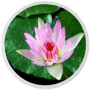 Round Beach Towel featuring the photograph Pink Waterlily Flower by David Lawson