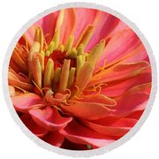 Round Beach Towel featuring the photograph Pink Zinnia Touched By Mornings Light by Bruce Bley