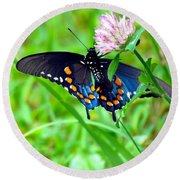 Pipevine Swallowtail Hanging On Round Beach Towel