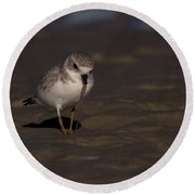 Piping Plover Photo Round Beach Towel