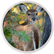 Playful Fawn Toddler Round Beach Towel by Nava Thompson