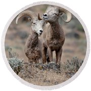 Playfull Rams Round Beach Towel by Athena Mckinzie