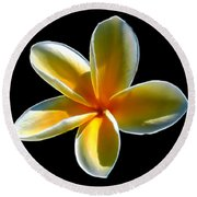 Plumeria Against Black Round Beach Towel