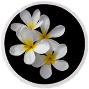 Round Beach Towel featuring the photograph Plumerias Isolated On Black Background by David Millenheft
