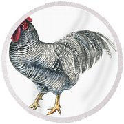 Plymouth Rock Rooster  Round Beach Towel by Anonymous