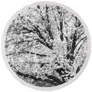 Round Beach Towel featuring the photograph Poetry Tree by Roselynne Broussard