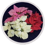 Poinsettia Tricolor Round Beach Towel